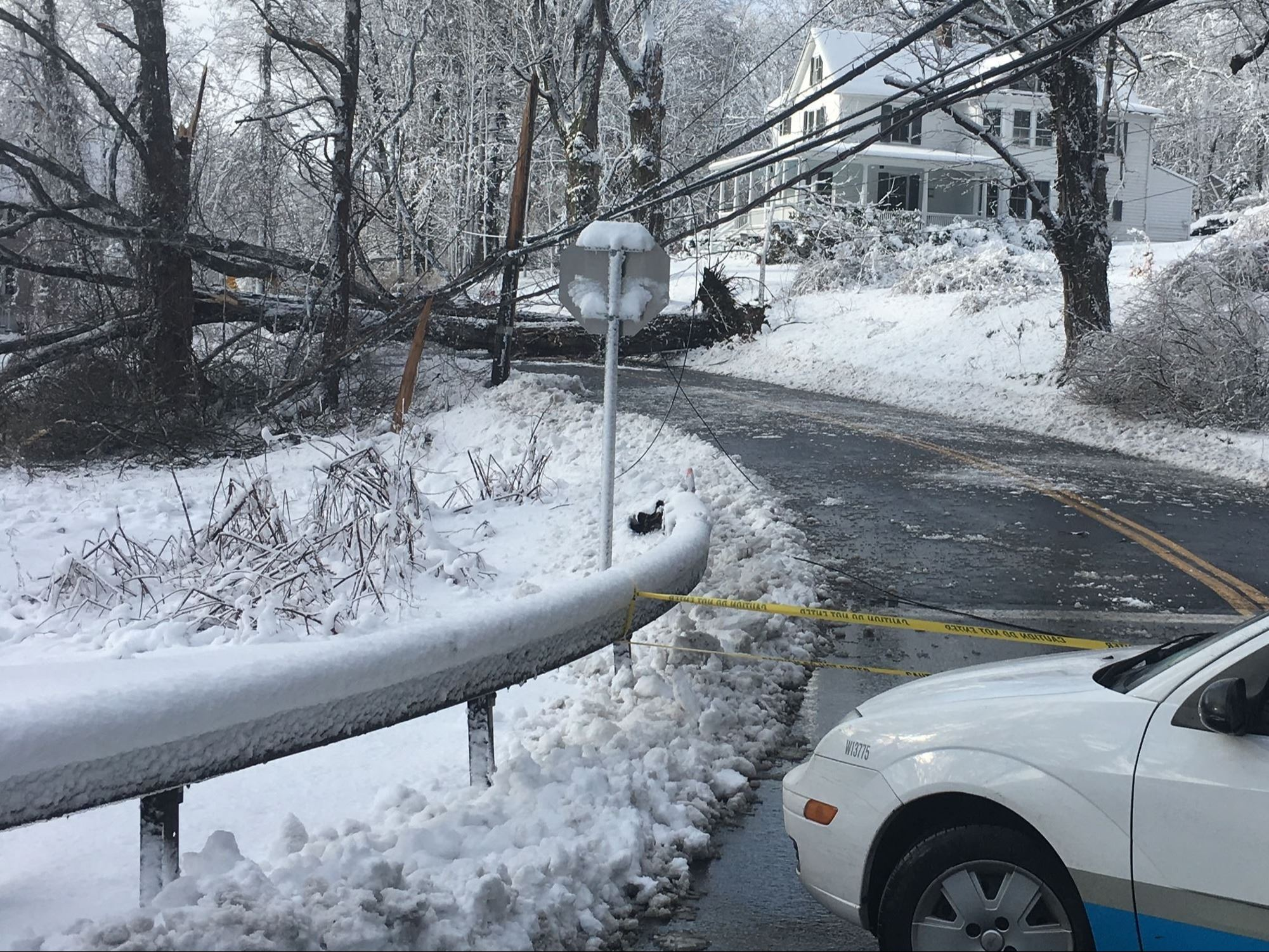 Fallen Tree on Road in Snow Storm